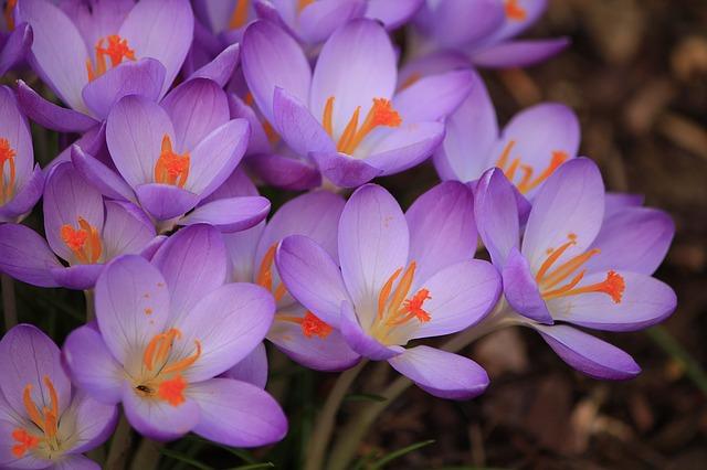 purple-flower-1216293_640