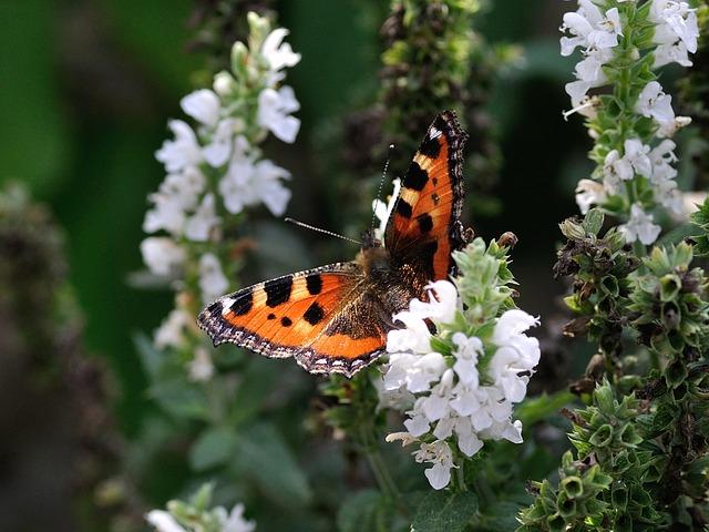 butterfly-199115_640