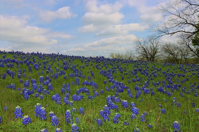 wildflowers-1187878_640