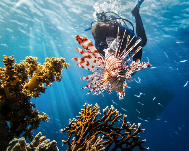 red-sea-2613882_640