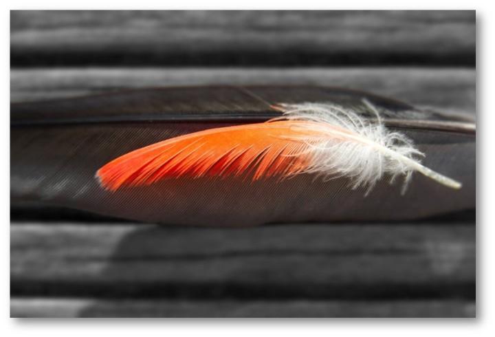 Thistledown – Midsummer Bedlam 29 — AHummingbird