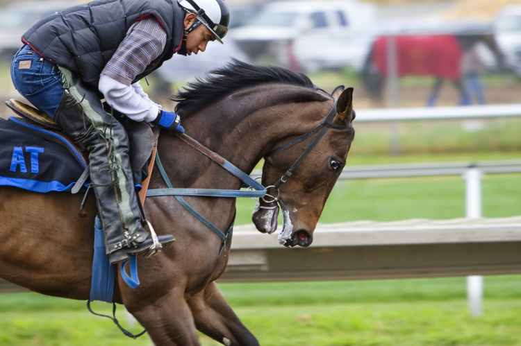 racehorse-horse-race-course-sport-53122.jpeg