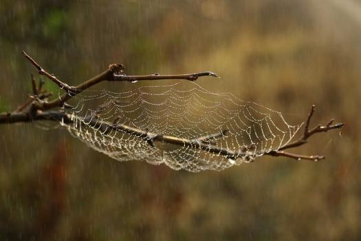 spider-web-3769149_960_720.jpg