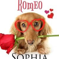 Blame it On Romeo by @SophiaKnightly #Romance #amreading @XpressoReads