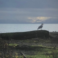 Seagull #SilentSunday