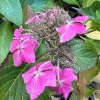 #SundayStills- In the Pink #Photography #Gardenlife